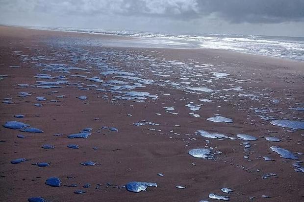 Desastre ambiental no Atlântico Sul, por Gustavo Gollo