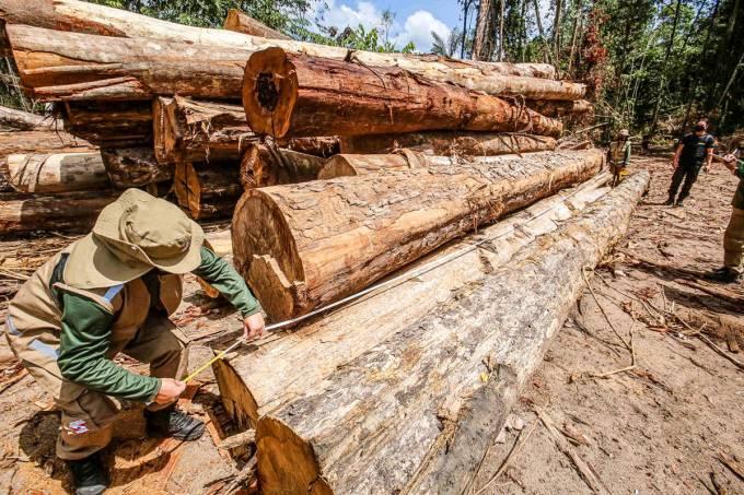Presidente do Ibama derrubou licença para exportação, após se reunir com madeireiros