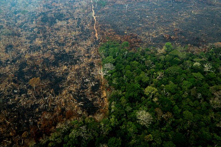 Brasil segue líder isolado no ranking mundial de destruição de florestas tropicais